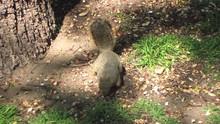 Squirrel Eats A Small Nut Near...