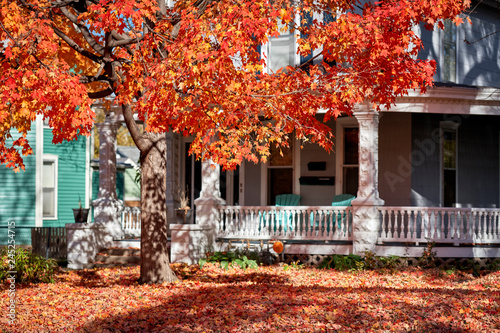 Poster Corail a colorful red tree in autumn