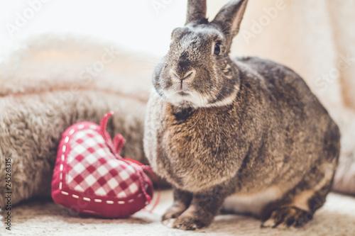 Fotodibond 3D Mały szary królik z sercem w stylu vintage, miękkie naturalne odcienie