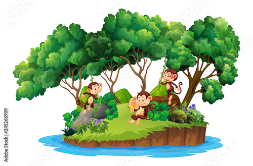 Staande foto Kids Monkey on isolated island