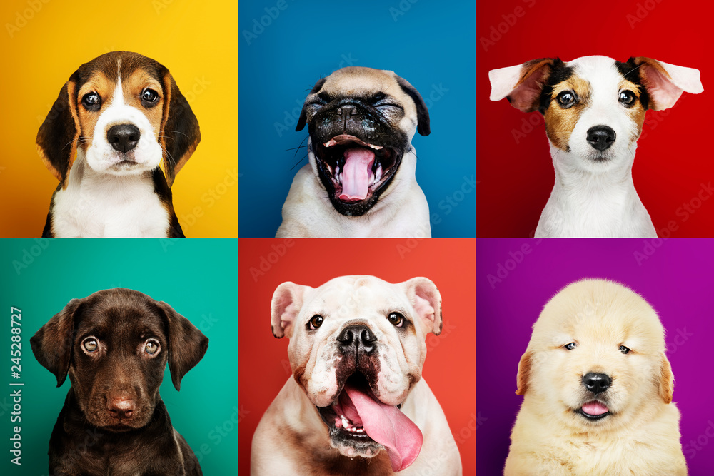 Photo  Portrait collection of adorable puppies
