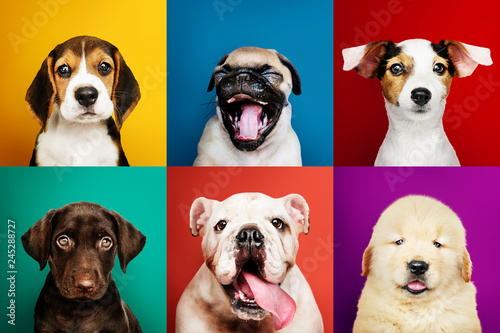 Portrait collection of adorable puppies Canvas Print
