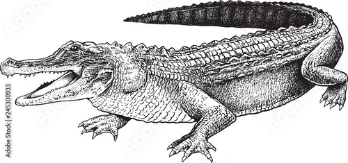 Fotografia, Obraz A sketch of a crocodile