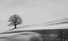 Lonely Tree With Bare Branches...