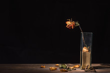 Withered Rose In Glass Vase, Dry Flower Petals And Leaves Falling On Table
