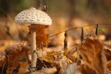 Danger Mushroom