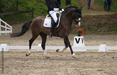 Foto op Canvas Paarden Dressage horse (pony) with rider in the dressage quadrangle, in the gait trot..