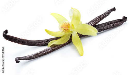 Dried vanilla pods and orchid vanilla flower on white background.