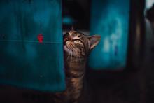 Dirty Cat On Blue Box