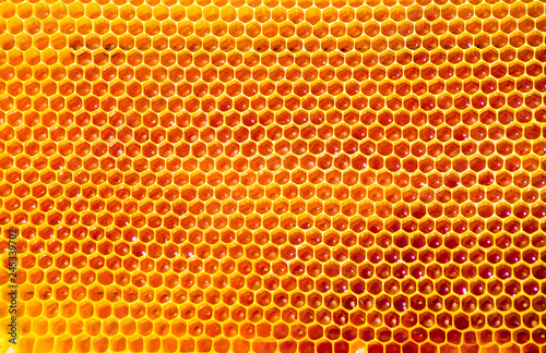 Tuinposter Bee bees work on honeycomb