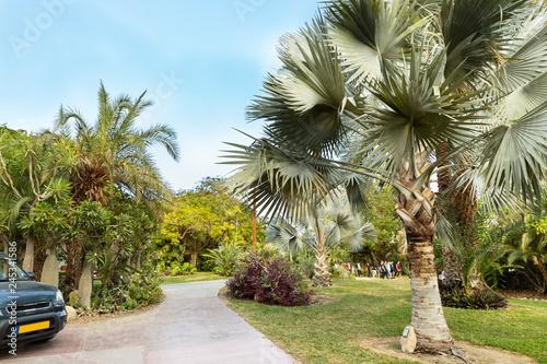 Foto  An amazing Botanical Garden with resort  -  Ein Gedi kibbutz Israel, Dead See, N