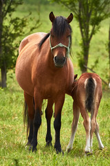 Nice horse family on the pasture