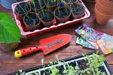 Spring Seedling Of Flowers And Vegetables