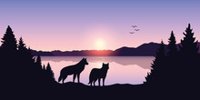 Two Wolves Look To The Lake An...