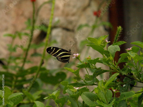 Poster Chamaleon Tiere Blumen