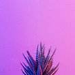 canvas print picture - Pastel neon blue and pink light paint on cactus