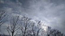 Many Ravens In The Winter Sky ...