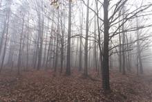 Mglisty Jesienny Piękny Las