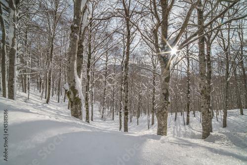 Tuinposter Weg in bos parco nazionale d'abruzzo