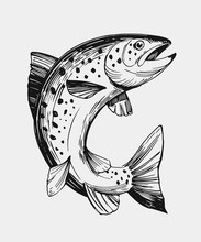 Sketch Of Fish. Salmon, Trout....