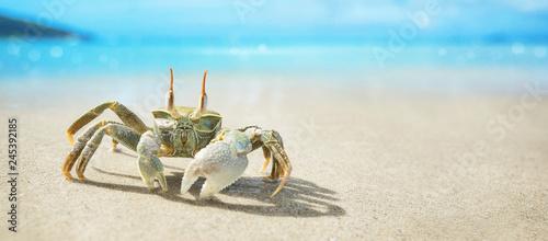 Photo  Seychelles Crab on the Ocean Coast. Tropical Island