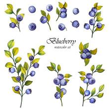 Watercolor Set Of Blueberries ...
