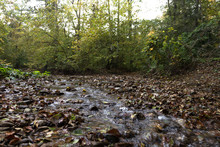 The Stream Flows Along A Stony Bed In The Autumn Forest. Autumn Landscape.