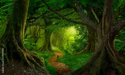 Foto op Canvas Weg in bos Asian tropical rainforest