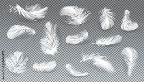 Vector 3d realistic set of white bird or angel feathers in various shapes, isolated on transparent background Canvas Print