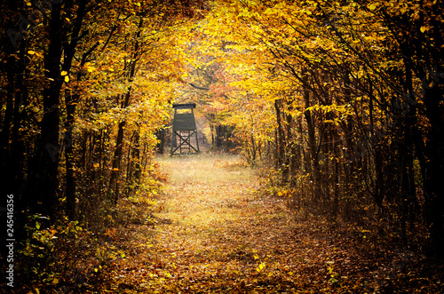 Foto op Aluminium Herfst Autumn forest in November, Hungary