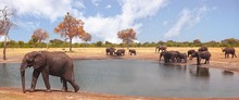 Herd Of Elephants At A Waterhole With A Natural Pale Blue Sky In Hwange National Park, Zimbabwe