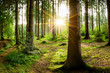 canvas print picture - Beautiful forest with bright sun shining through the trees
