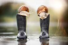 Zwei Schnecken Sitzen Auf Gummistiefel Im Regen