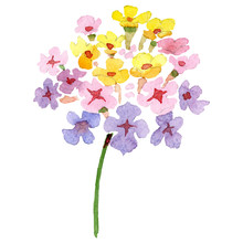 Pink Yellow Lantana Floral Bot...