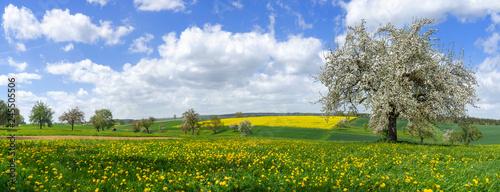 Photo Blühender Baum in malerischer ländlicher Landschaft im Frühling