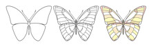 Beautiful Butterfly Icon. Vect...