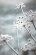 canvas print picture - Winter Detail Natur Eifel Frost Raureif