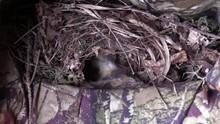 Bird Carolina Wren Cleaning Nest