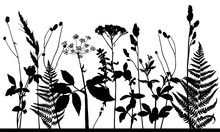 Vector Silhouette Of Meadow Wi...