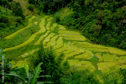 Poster Rijstvelden Terraced rice field in Northern Thailand