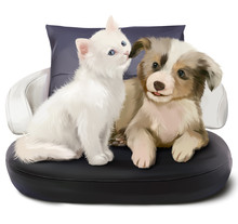 A Kitten And A Puppy Sitting On The Couch