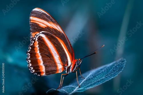 Obraz na plátně  Closeup   beautiful butterfly sitting on flower