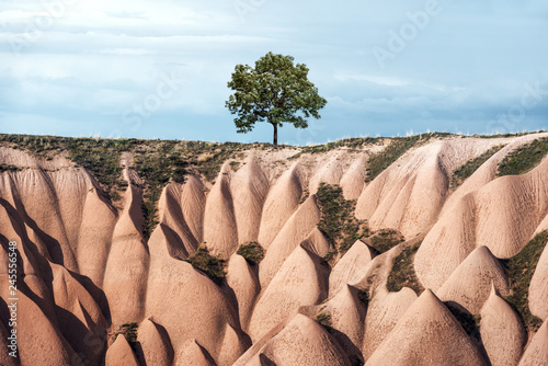 Alone tree in amazing hills in Cappadocia mountains, Turkey Canvas Print