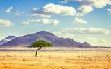 Fototapeta Sawanna - Savannah plains landscape in Kenya