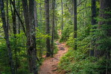 A Trail In A Lush Forest Along...