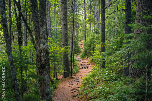 A trail in a lush forest along the Kancamagus Highway, in White Mountain National Forest, New Hampshire