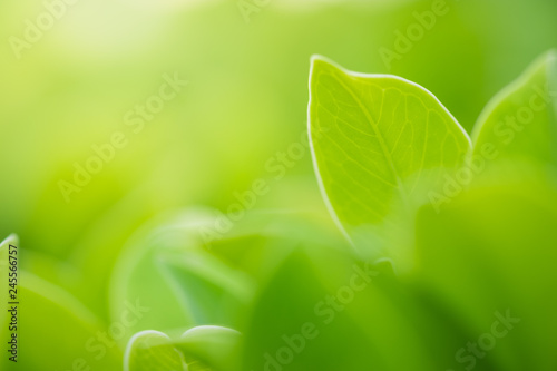 Foto op Aluminium Bomen Close up beautiful view of nature green leaves on blurred greenery tree background with sunlight in public garden park. It is landscape ecology and copy space for wallpaper and backdrop.