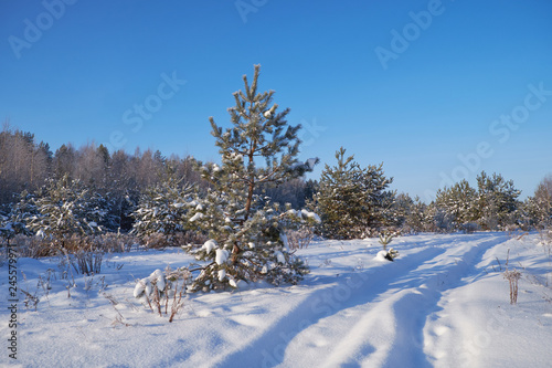 Fotobehang nature winter forest snow