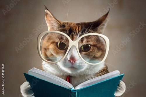 Poster de jardin Chat Cat in glasses holding a turquoise book and strictly looks into the camera. Concept of education, knowledge, etc.