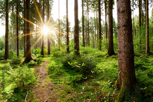 Fotobehang Weg in bos Beautiful forest in spring with bright sun shining through the trees